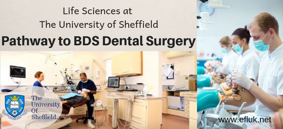 Pathway to BDS Dental Surgery